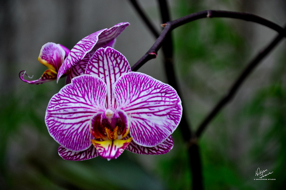 ORCHID  -03302013-5742